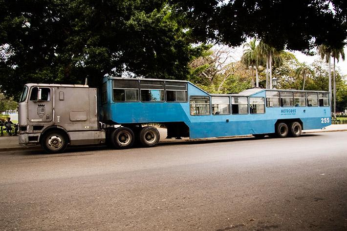 camel bus unique transportation
